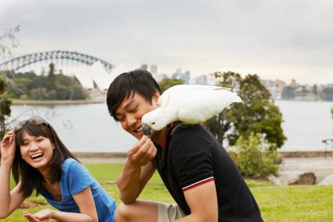 悉尼, 留学, 女生, 求包养, 找干爹